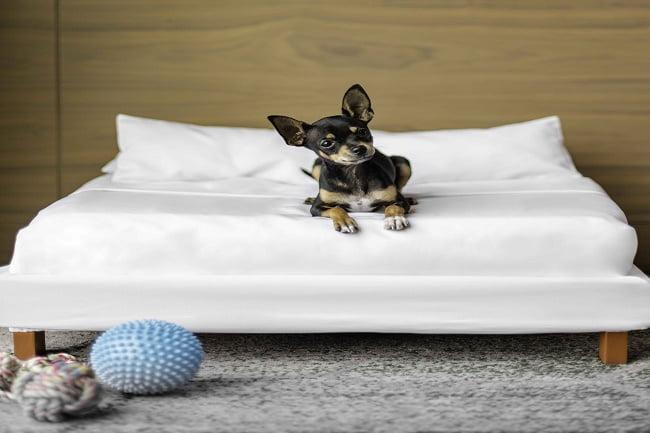 Servicio de lujo para tu mascotas